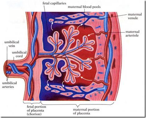adrenal suppression steroids